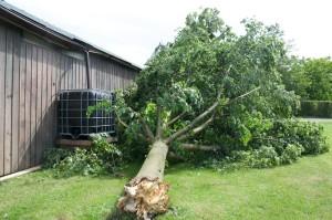umgefallener Baum vom Sturm im Sommer 2014