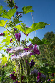 Blumenwiese 10
