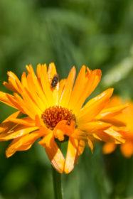 Blumenwiese 12