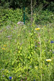 Blumenwiese 13