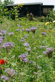 Blumenwiese 14