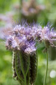 Blumenwiese 15