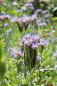 Blumenwiese 16
