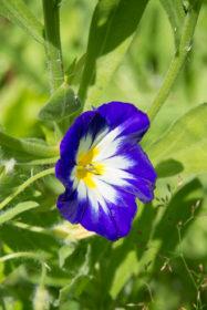 Blumenwiese 19