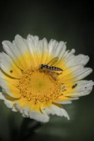 Blumenwiese 24
