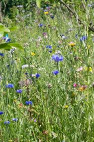 Blumenwiese 27