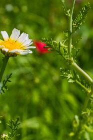 Blumenwiese 30