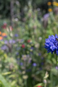 Blumenwiese 31