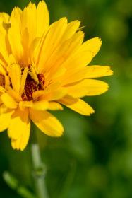 Blumenwiese 34