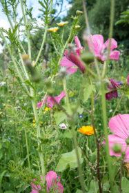 Blumenwiese 36