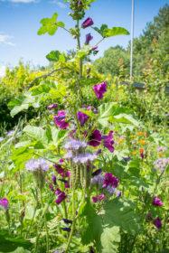 Blumenwiese 9