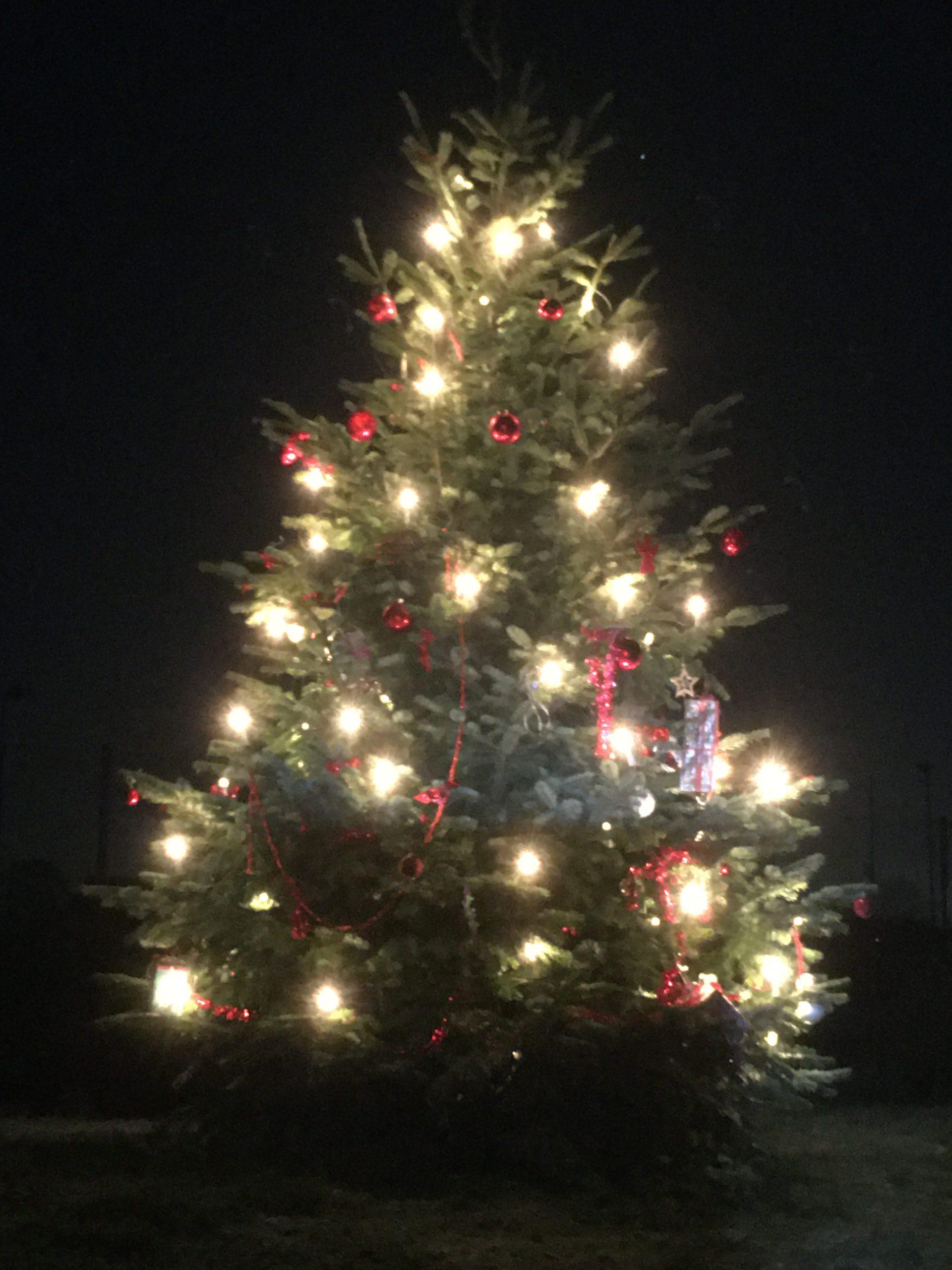 Weihnahtsbaum 2019